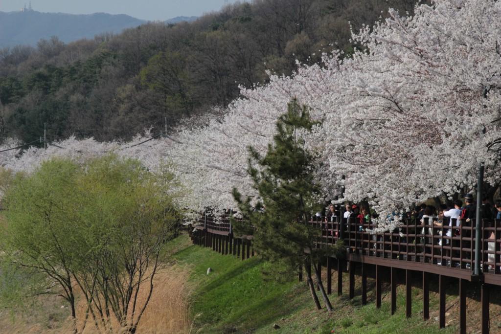 봉녕사,광교마루,경기대,수원행궁,칼국수 082