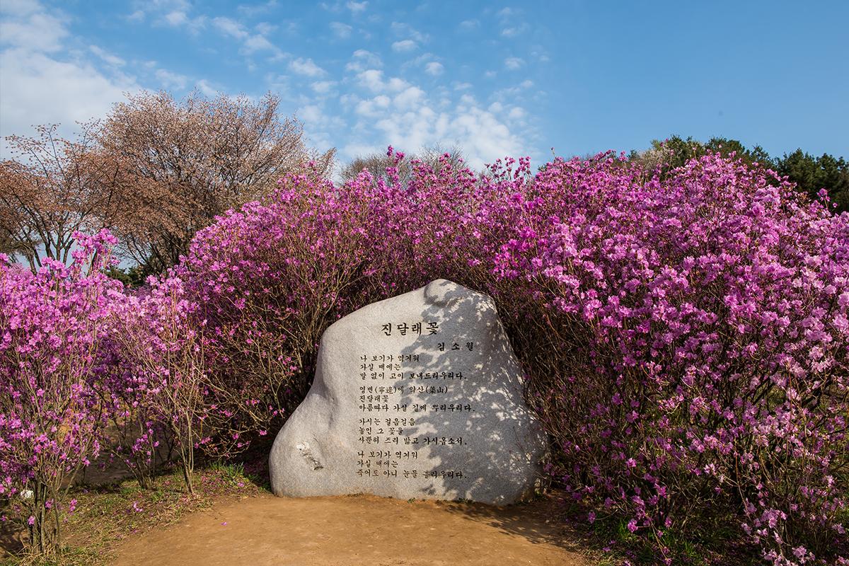 01 원미산진달래공원