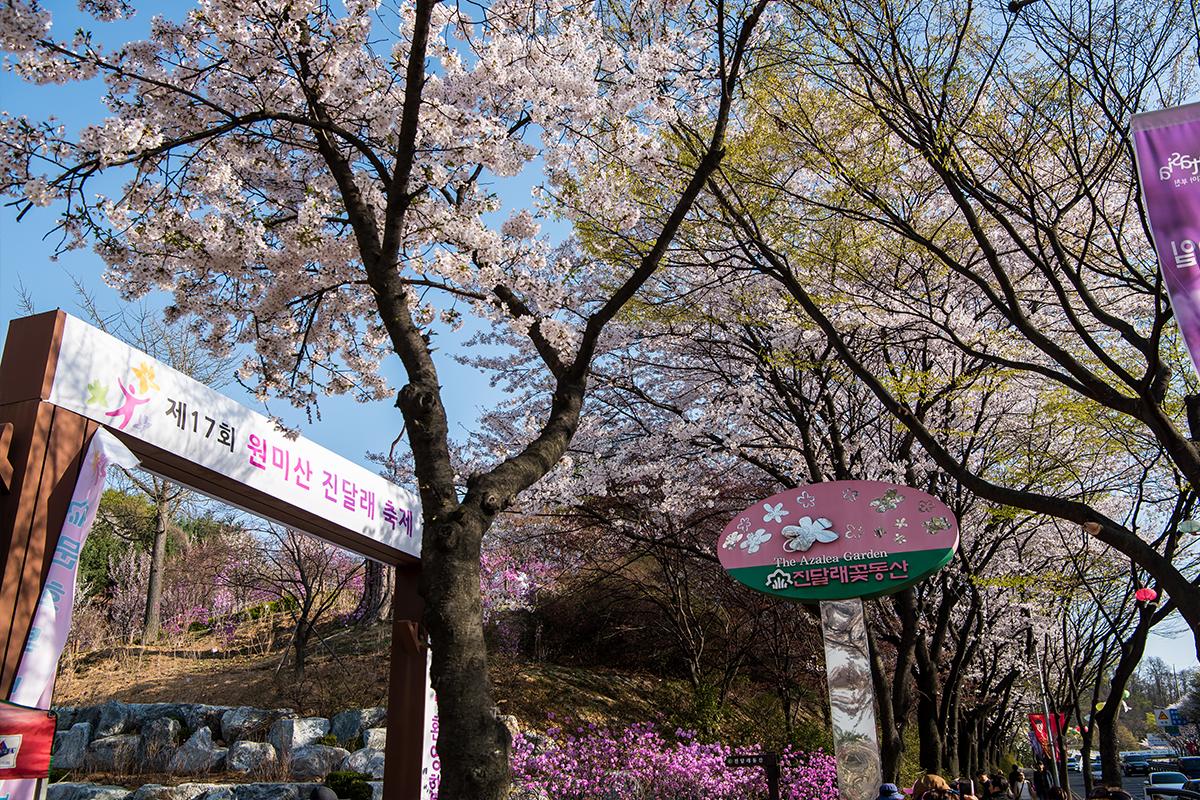 04 원미산진달래공원