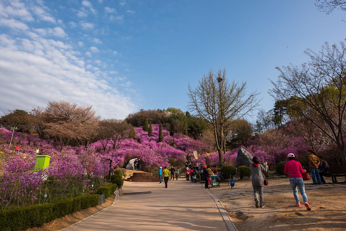 06 원미산진달래공원