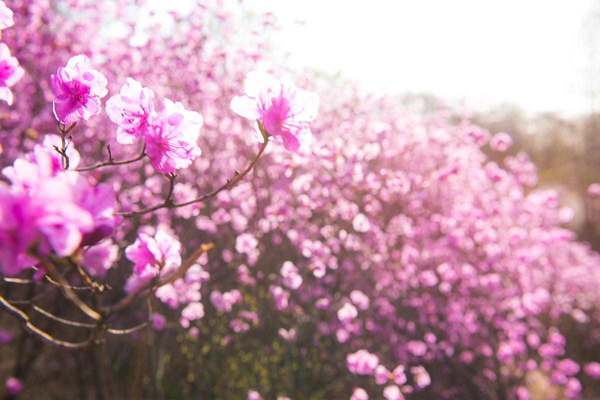 07 원미산진달래공원