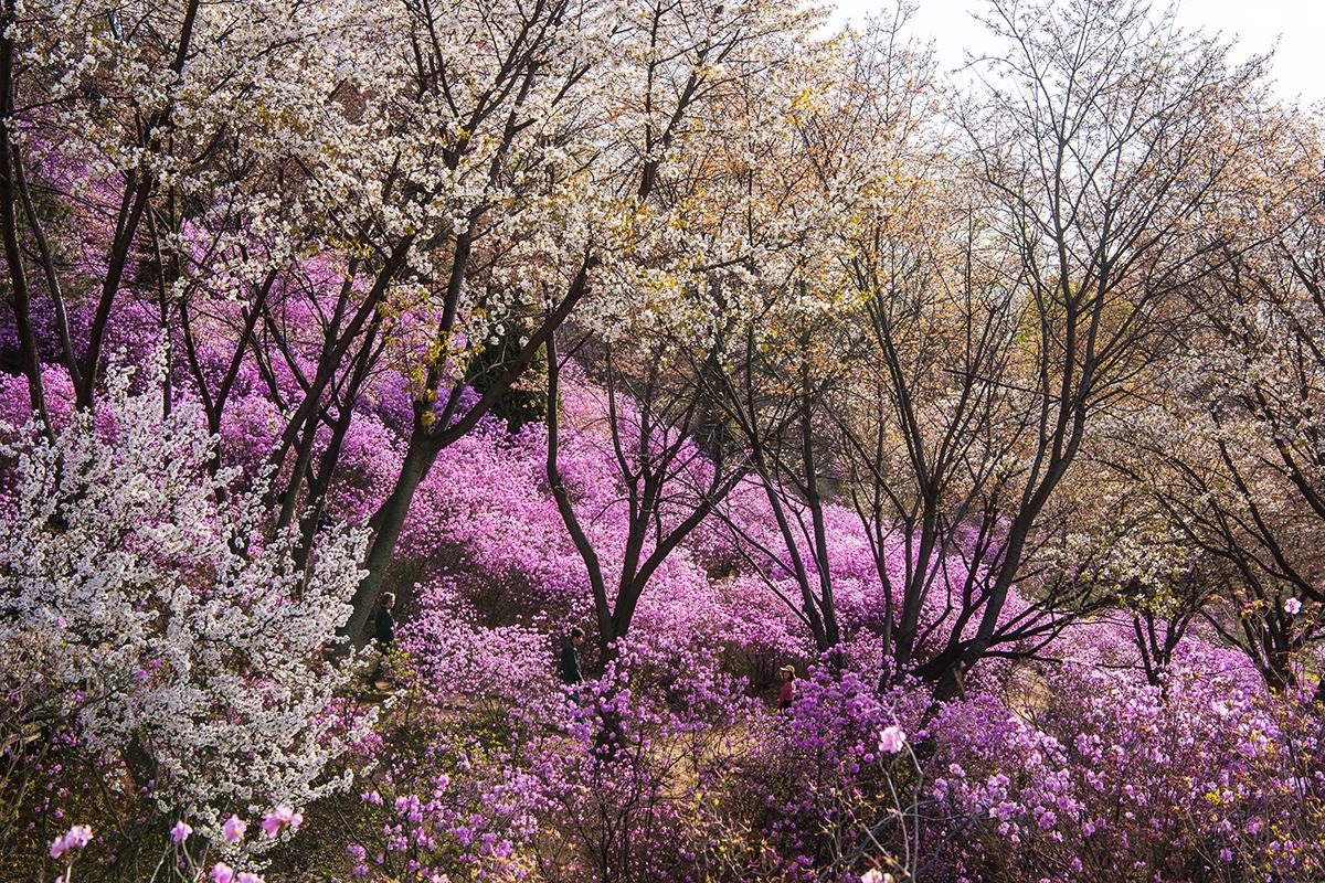 17 원미산진달래공원