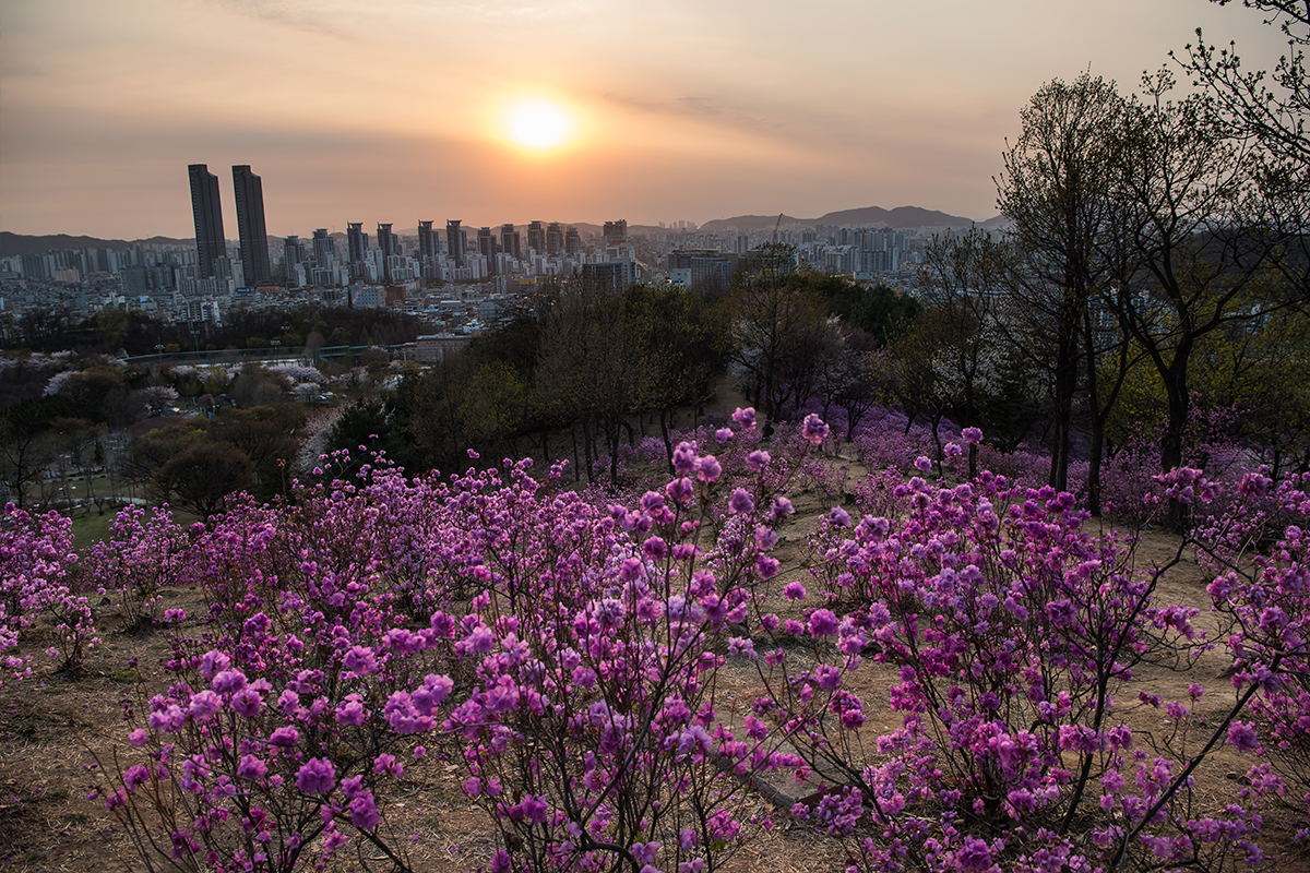 23 원미산진달래공원
