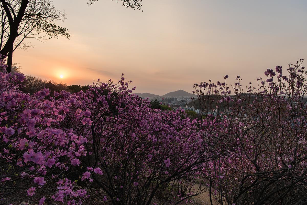 25 원미산진달래공원