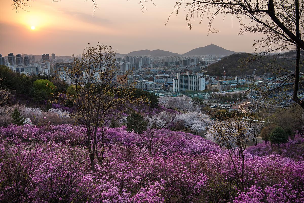 27 원미산진달래공원