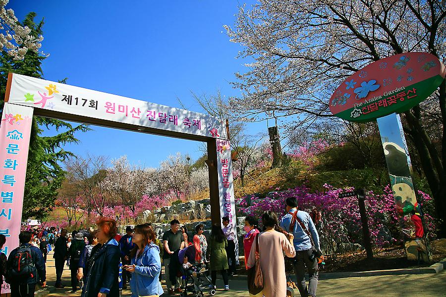 원미산진달래축제,부천여행,부천가볼만한곳