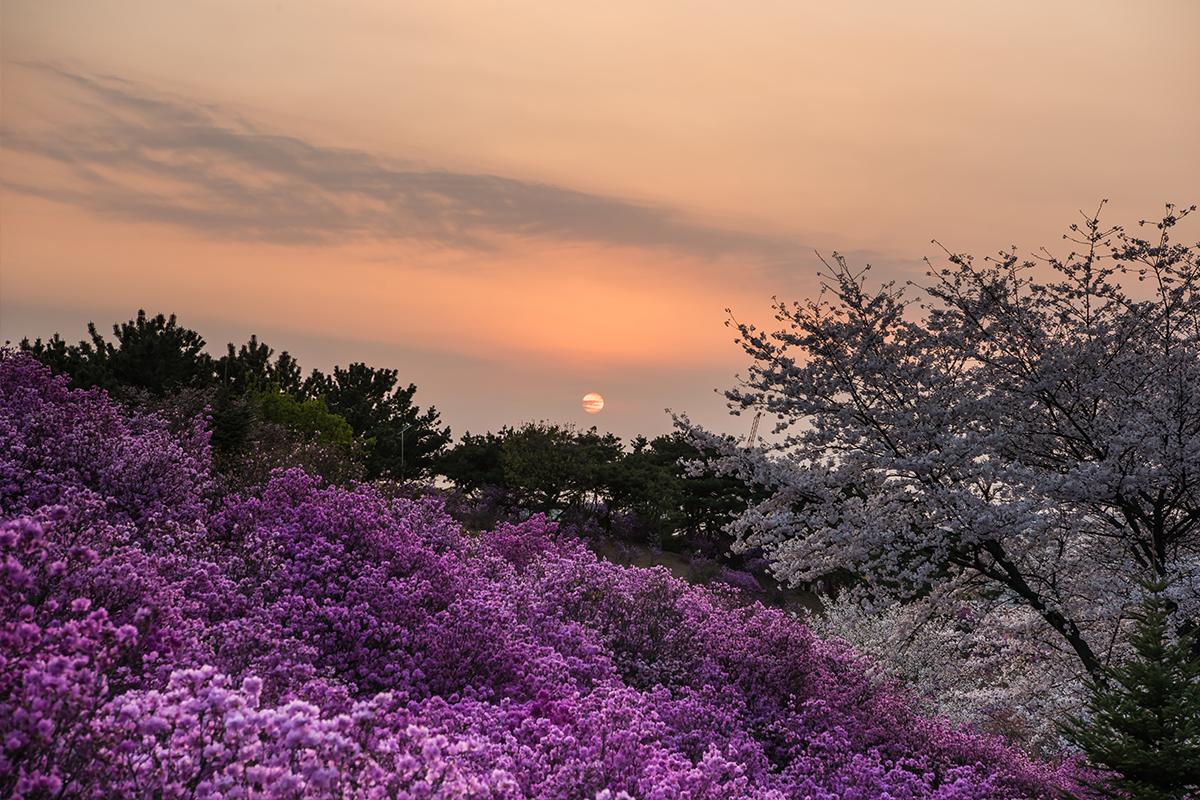 32 원미산진달래공원