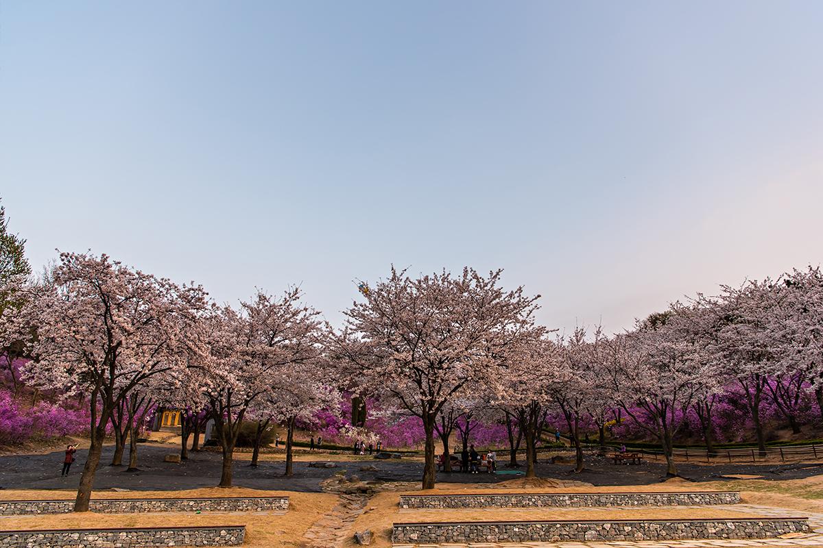 34 원미산진달래공원