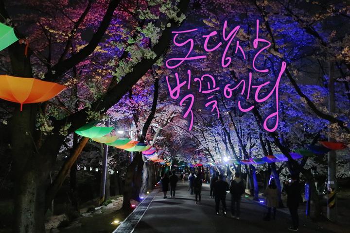 도당산 벚꽃야경