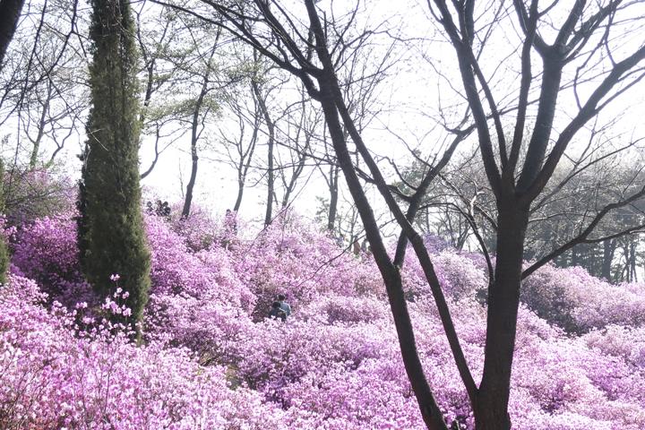 꽃과 함께하는 봄산책