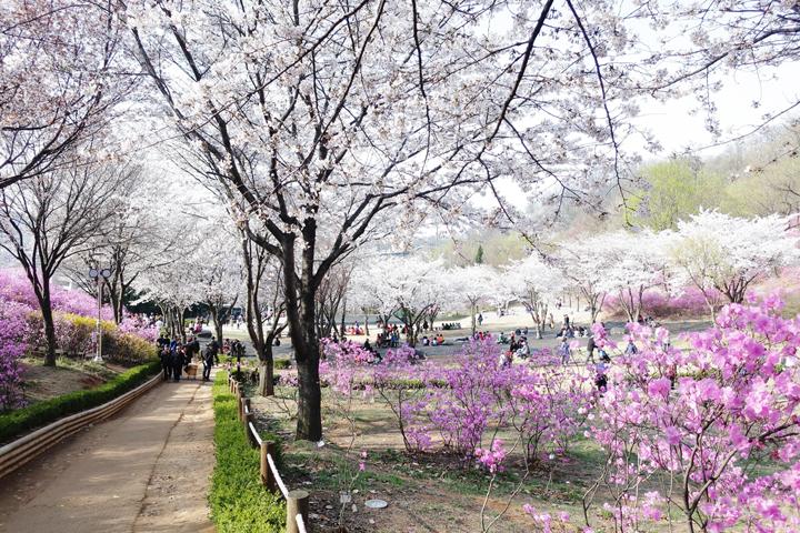 진달래동산의 봄