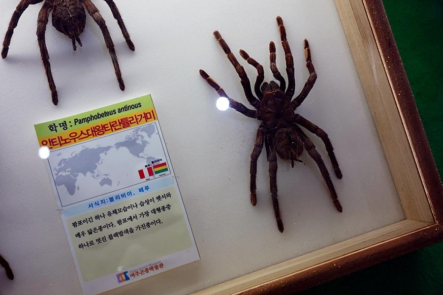 곤충박물관 (19)