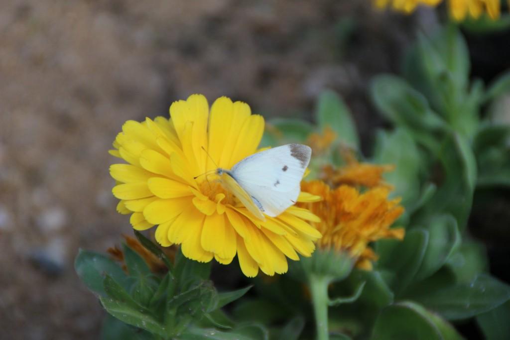 여주도자,신륵사 곤충박물관 352