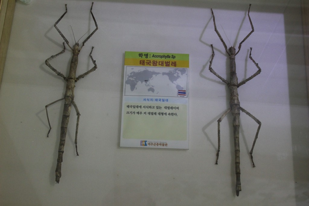 여주도자,신륵사 곤충박물관 370