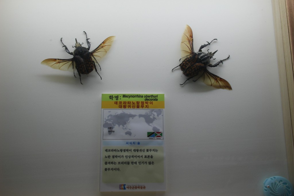 여주도자,신륵사 곤충박물관 378