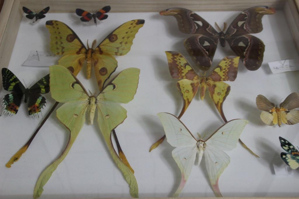 여주도자,신륵사 곤충박물관 428