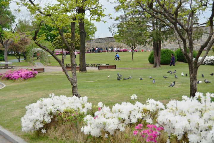 철쭉 핀 장안공원