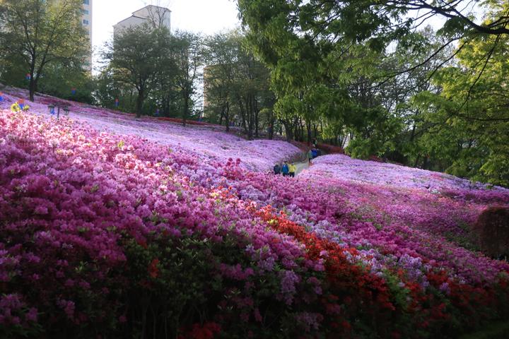 군포철쭉공원