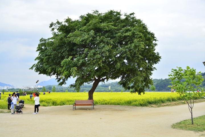 그늘을 만들어주는 나무