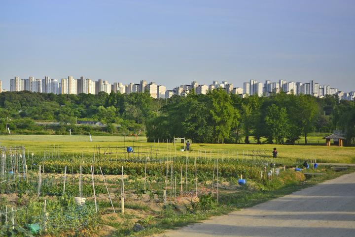 시민농장의 풍경