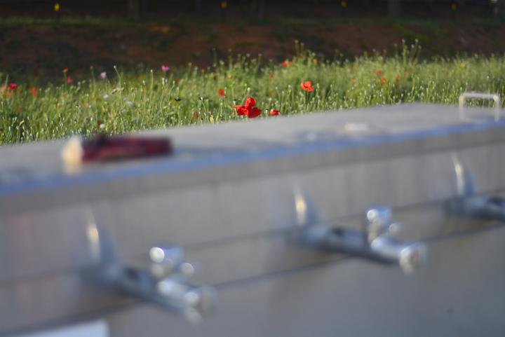 세면대 주변 개양귀비 꽃