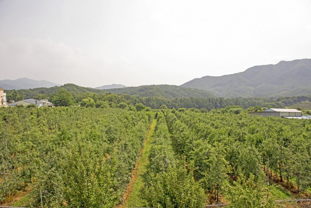 사과농장 사진