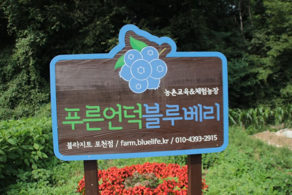 농촌교육&체험농장 푸른언덕 블루베리