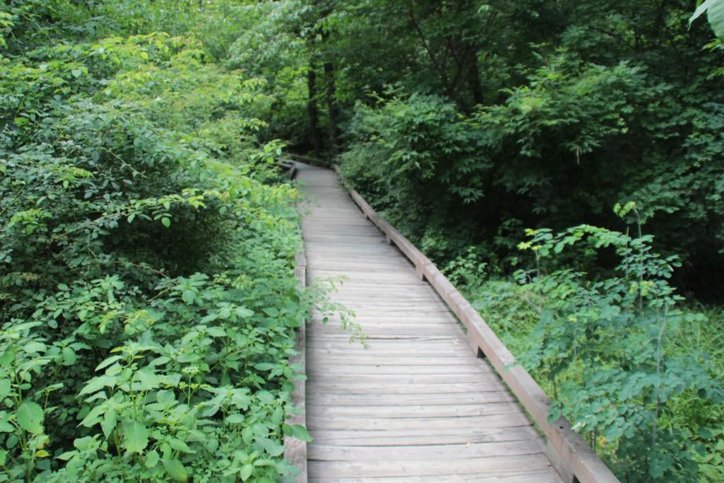 숲으로 이어지는 길