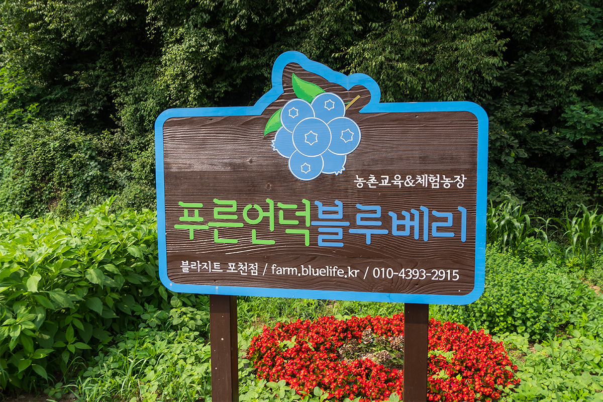 농촌교육&체험농장 푸른언덕 블루베리 표지판