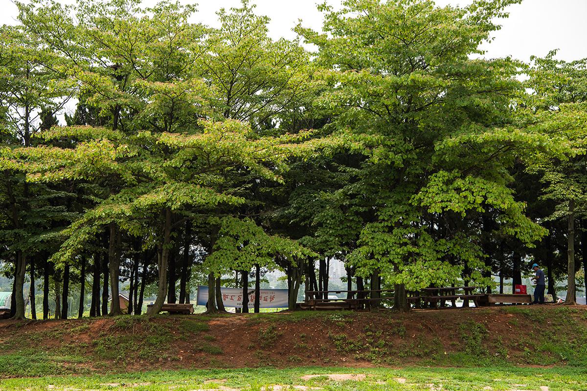나무 쉼터의 모습