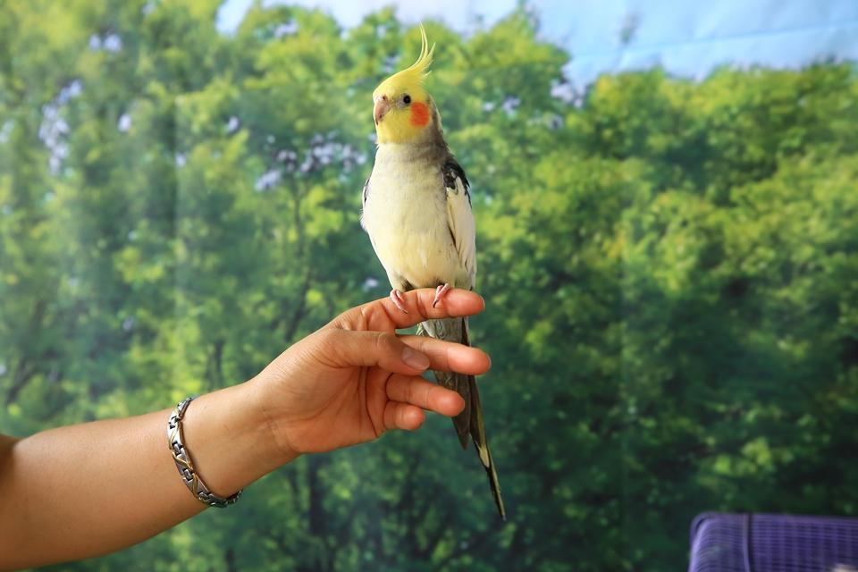 손에 앉아있는 앵무새