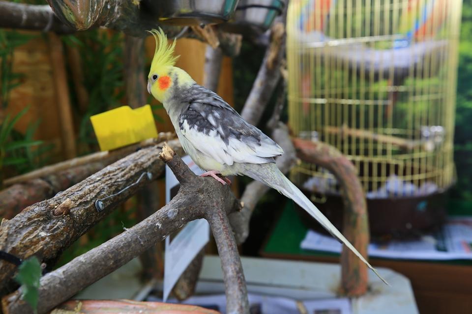 나뭇가지에 앉아있는 앵무새