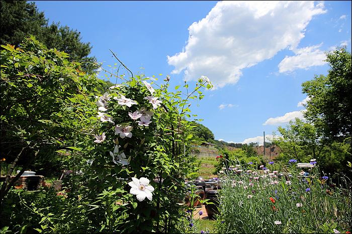 식당주변의 꽃밭