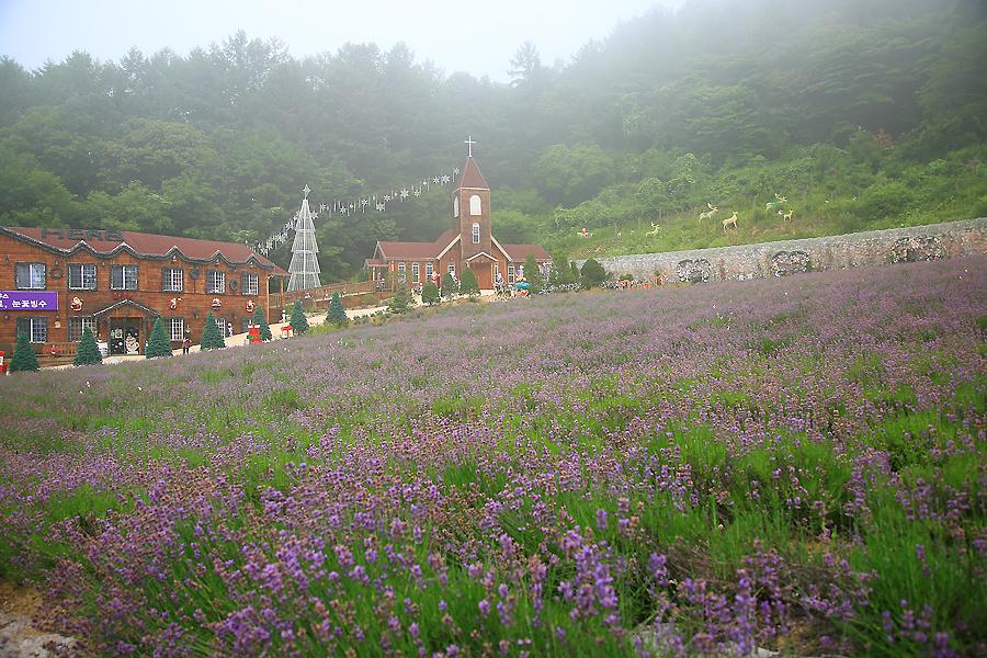 허브상점, 교회 그리고 라벤더 밭