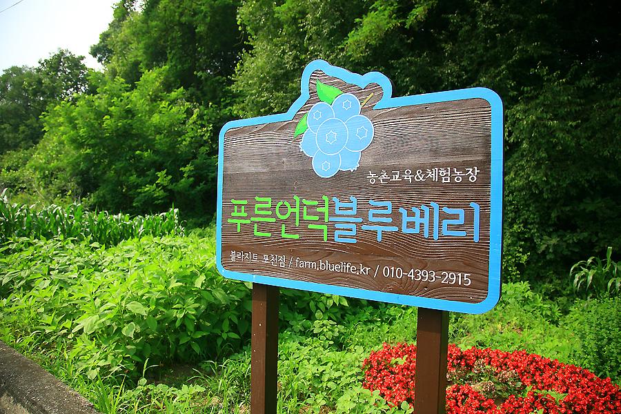 농촌교육&체험현장 푸른언덕 블루베리 표지판