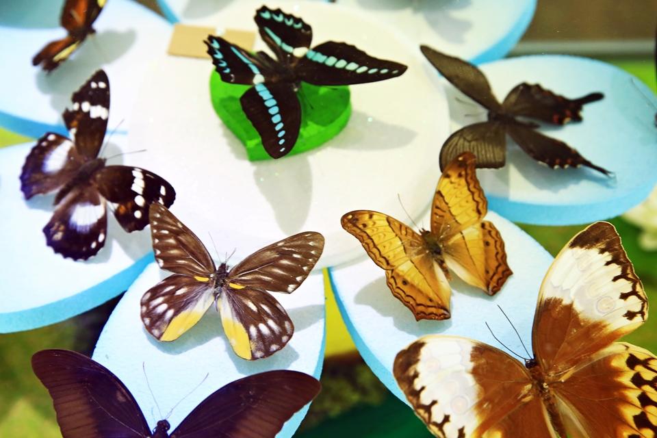 나비표본들