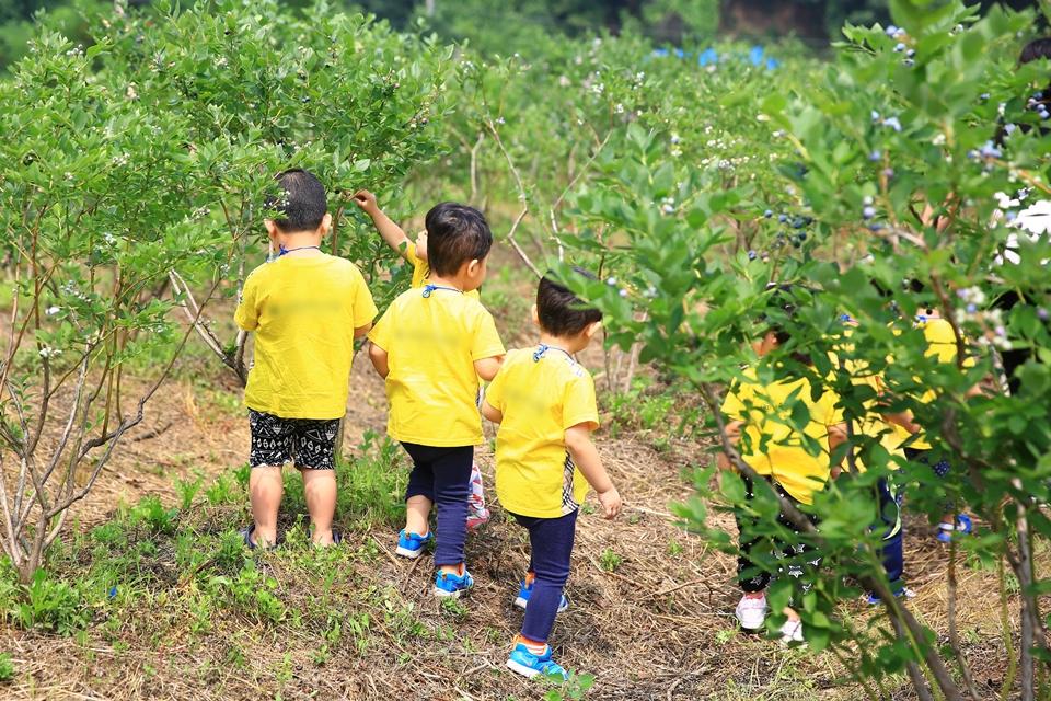 블루베리체험을 하는 아이들
