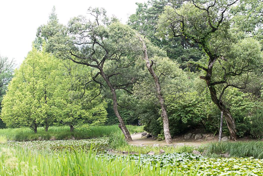광릉수목원의 전경