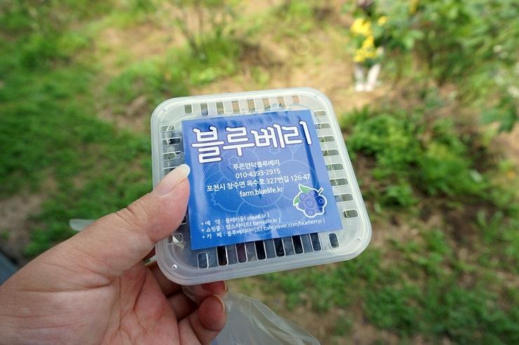 수확한 블루베리를 담은 모습