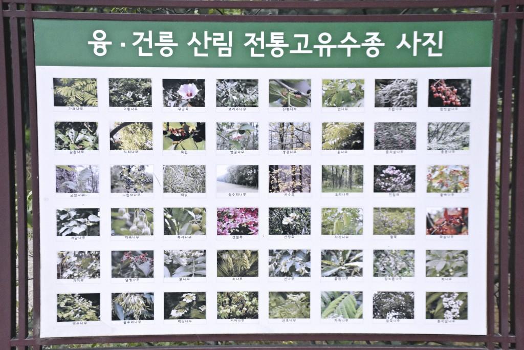 융.건릉 산림 전통고유수종 사진