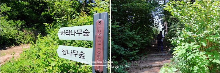 자작나무숲 참나무숲 이정표, 등산로 올라가는 사람