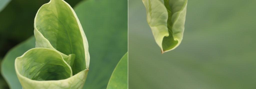 잎사귀의 하트모양