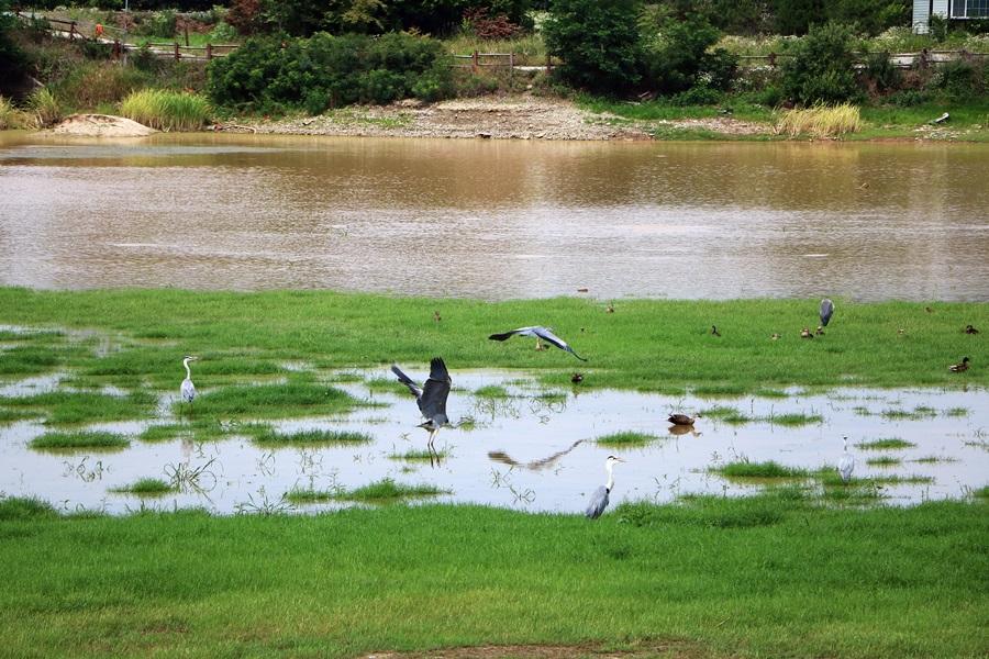 성호호수지의 새들