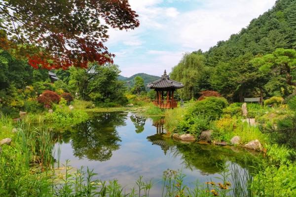 경기도 가평 가볼만한곳 아침고요수목원의 여름