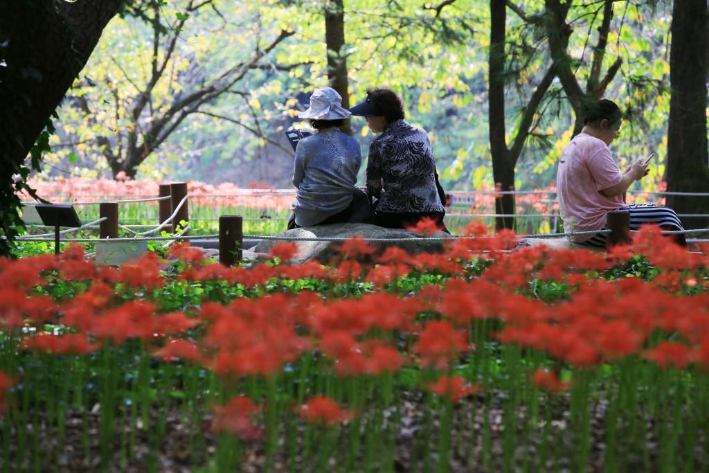 꽃무릇 009