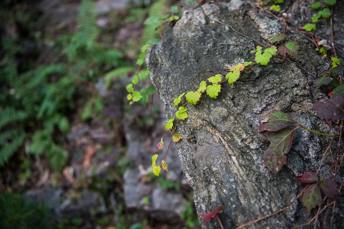 17 화담숲