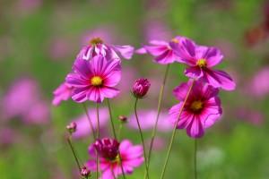 안양여행- 코스모스 꽃동산 산책코스