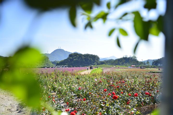 체험관광농원 장미정원