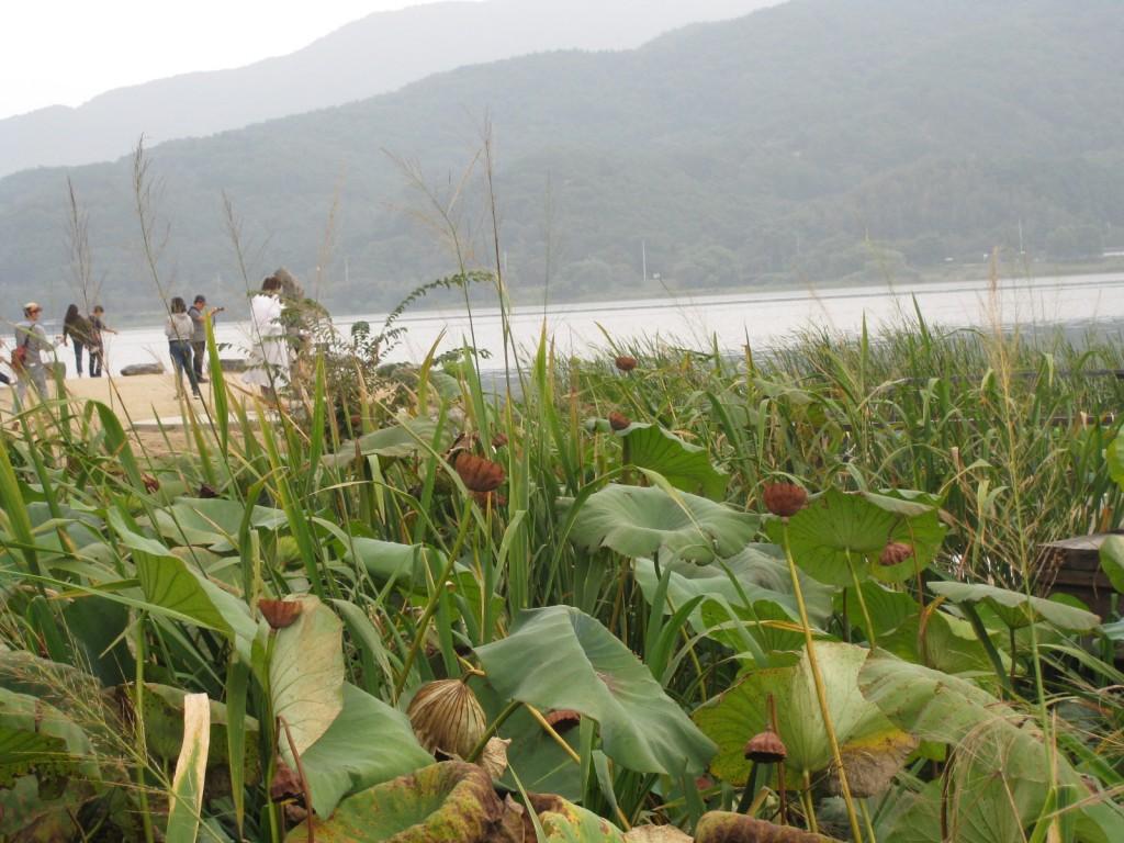 두메향기,구둔역,두물머리,김치말이 261