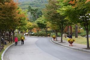 11월 #2. 화려한 단풍 숲 산책 '용인자연휴양림'